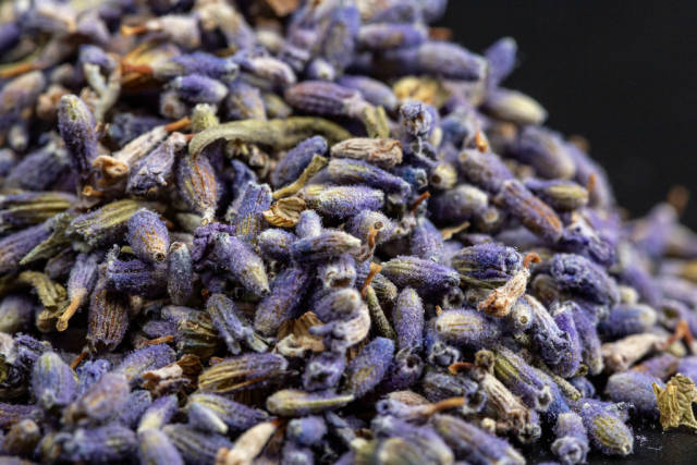 Close-up of dried lavender flowers