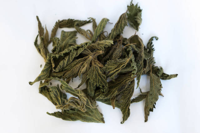 High Angle View of Dry Nettle  Leaves on the White Background