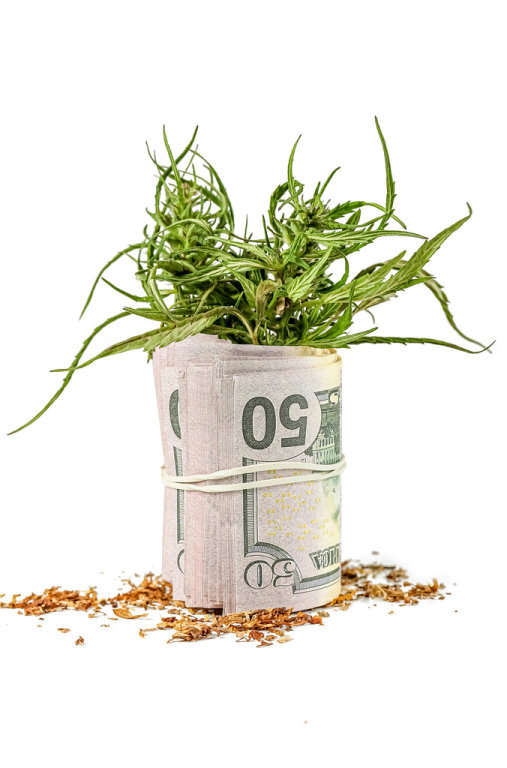 Dried and fresh hemp leaves with money on a white background