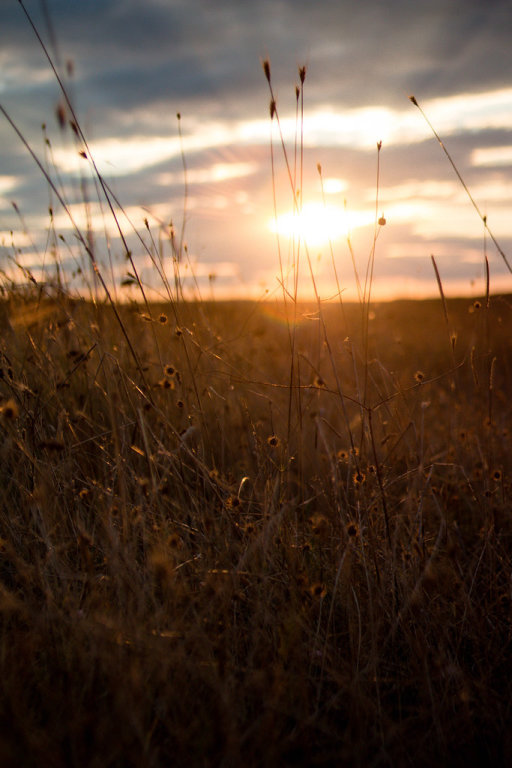 Sunset field landscape,Europe