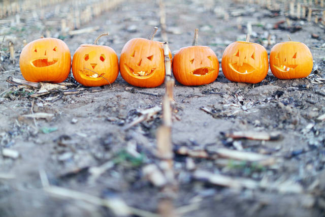 Six Halloween pumpkins on the field