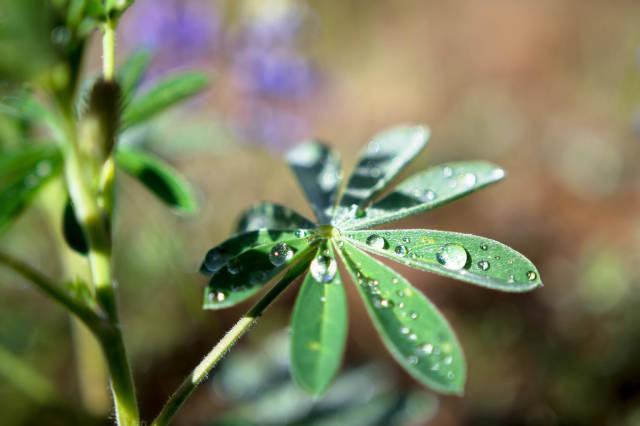 Pflanze mit Morgentau