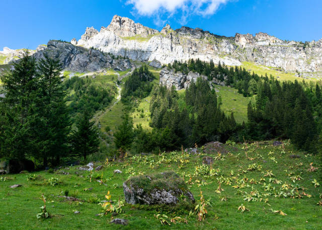 Feeld of green plants beneath the epic looking cliff in Switzerland