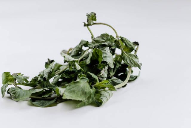 Fresh herb , close up