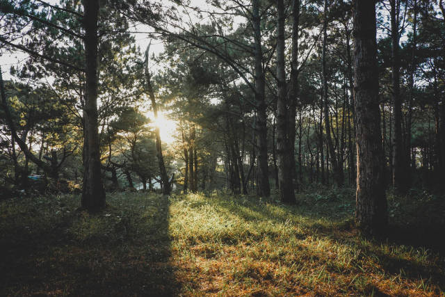 Sunset peaking in the woods of Don Salvador