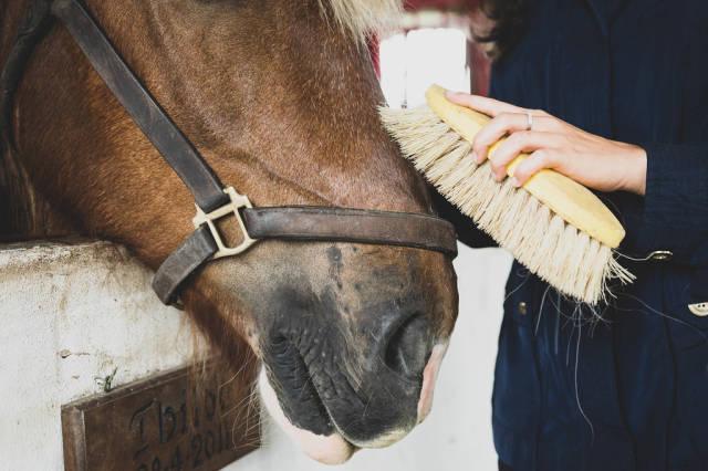 Girl burshing a horses hair