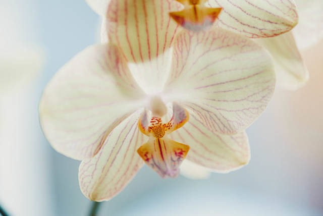 Close Up Of White Orchid On White Background