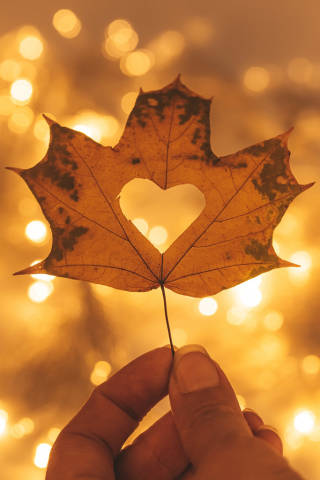 Beautiful bright autumn background with a maple leaf in a womans hand