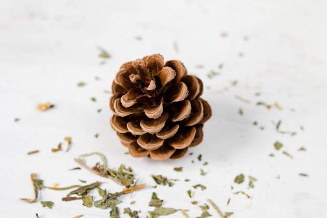 Tannenzapfen / Brown pine cone