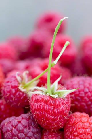 Close-up of ripe red raspberry