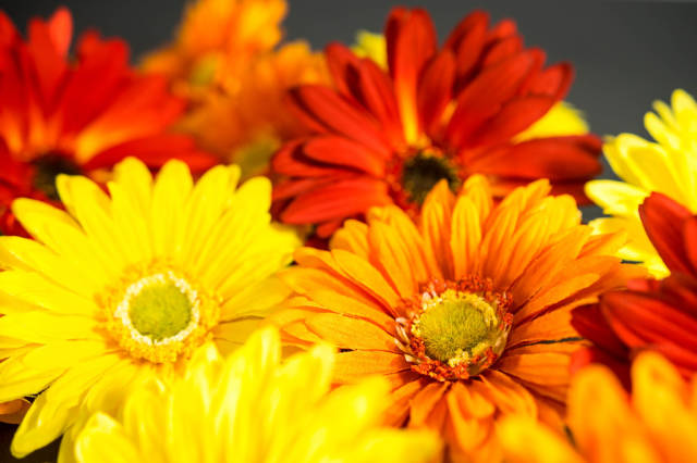 Red, orange, and yellow fake flowers
