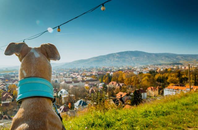 Dog watching the view