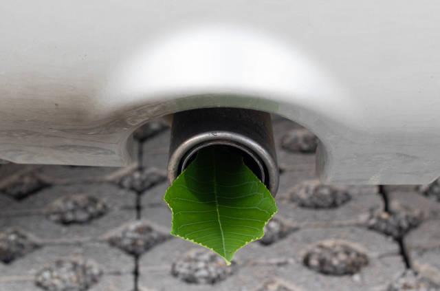 Leaf in a car pipe exhaust muffler