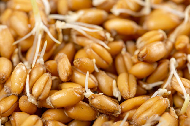 Close up of wheat germ background