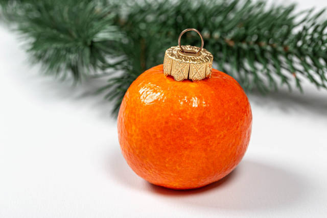 Tangerine fruit on white background with christmas tree branches