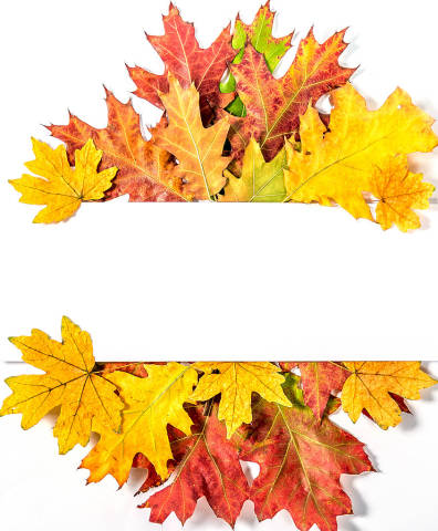 Autumn frame with yellow leaves