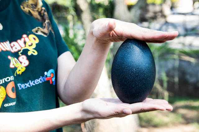 Lady holding an emus egg