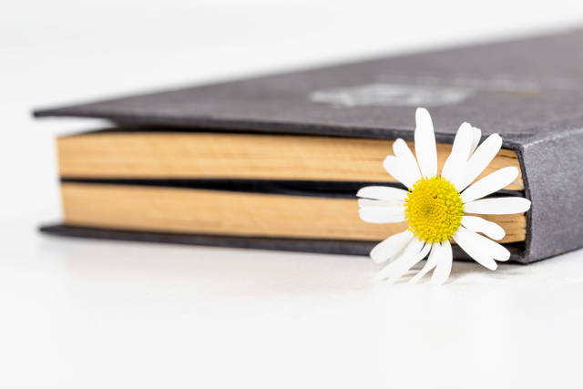 Close-up, chamomile flower in a closed book