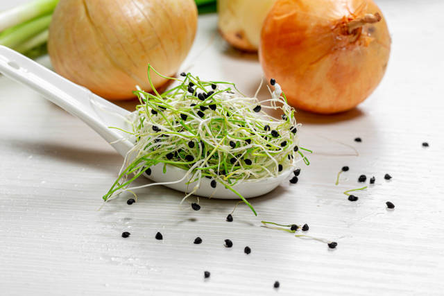 Seeds, micro greens and ripe onions on white wooden background