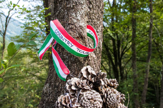 Tape in italian flag colors hanging on a tree