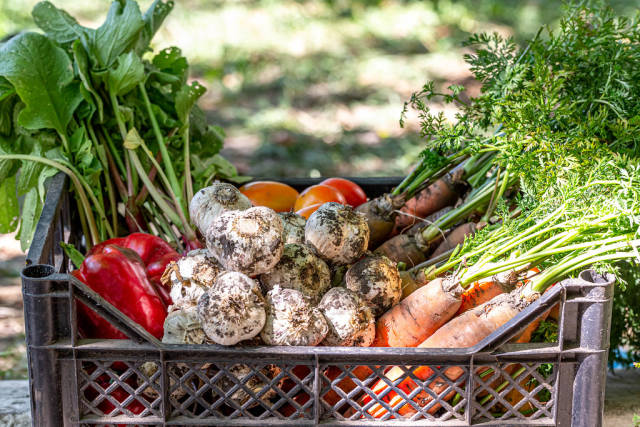 Fresh vegetables in the box. The concept of agriculture, harvesting