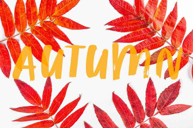 Autumn background with red dry leaves