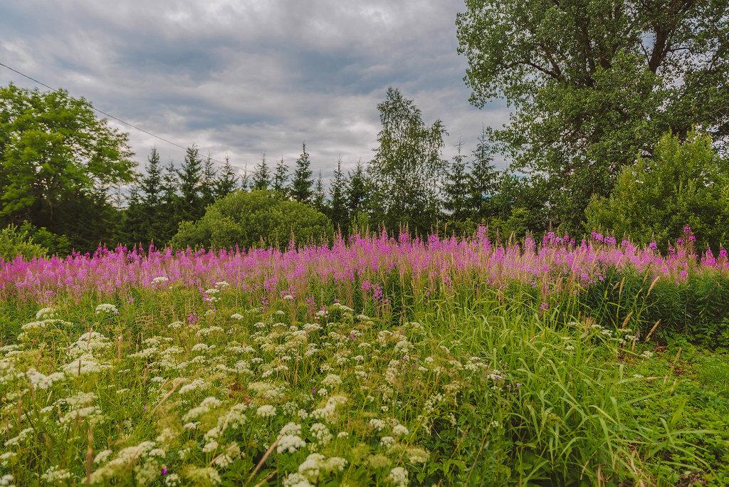 Wildblumen auf einer Wiese