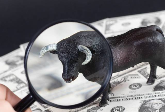 Black bulls face under magnifying glass
