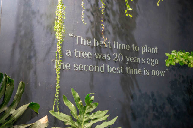 Der Spruch The best time to plant a tree was 20 years ago. The second best time is now an einer Wand mit Pflanzen