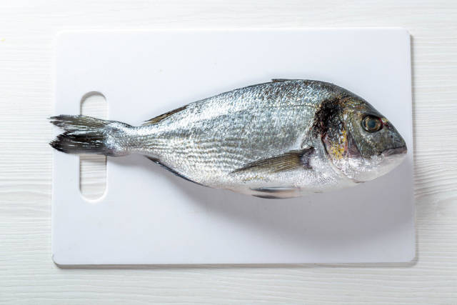 Fish dorado on white background