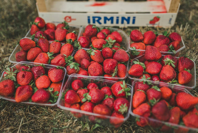 Bunch Of Strawberries On The Ground