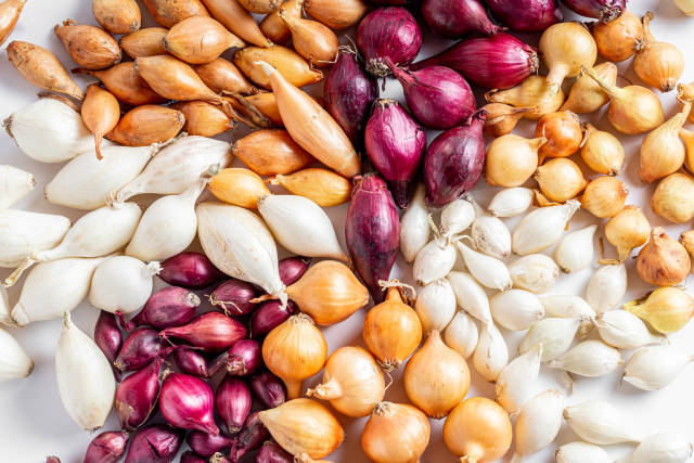 Close-up, white, red and Golden varieties of onion-seeds