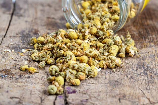 Dried chamomile flowers spill out of a glass jar on a wooden background