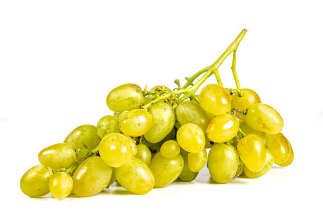 Branch of ripe sweet green grapes
