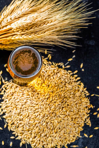 A glass of fresh beer with spikelets and barley grain