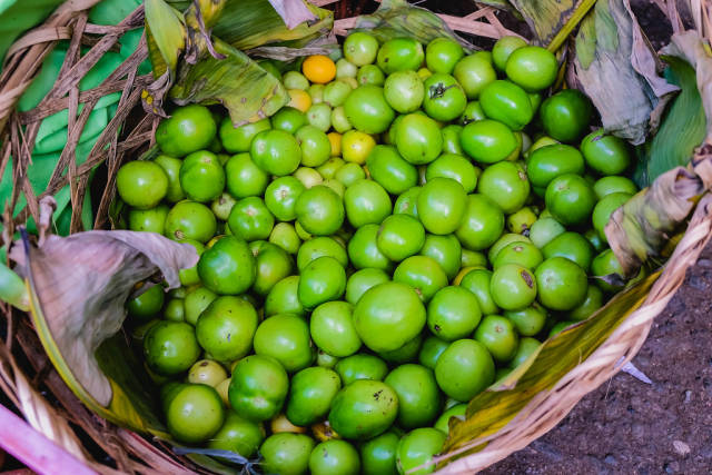 Harvested green tomatoes in basket