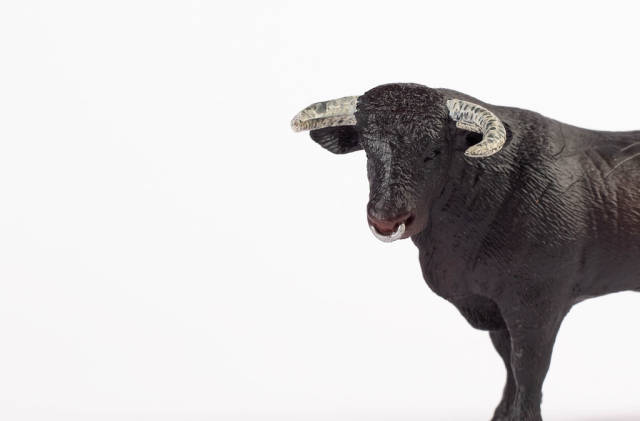 Black bull face isolated on white background