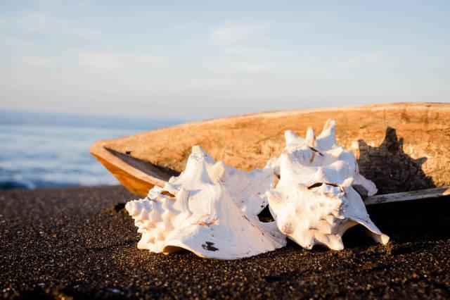 Schallen zweier Meeresschnecken und ein Gefäß aus Holz auf dem Sand