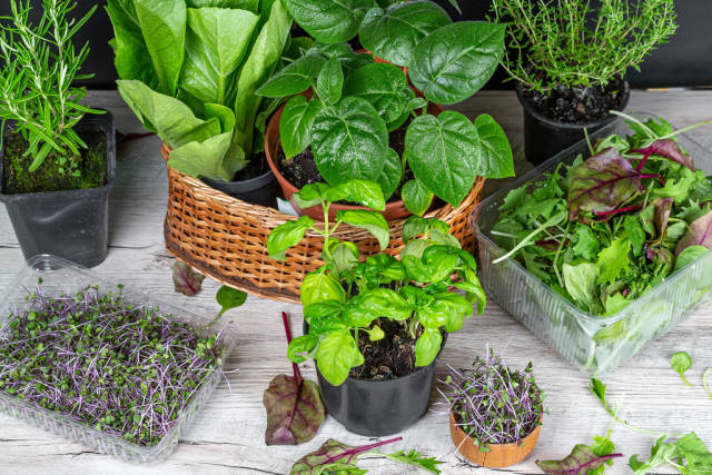 Set of various fresh herbs and leaf salads
