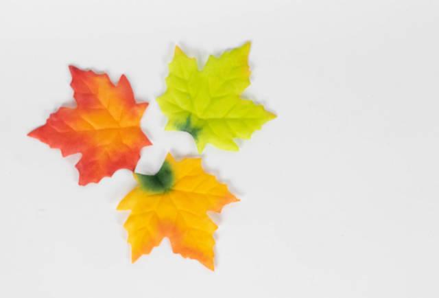 Drei abgefallene Ahornblätter im Herbst