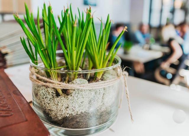 Zierpflanze in einem Restaurant. Innendekoration