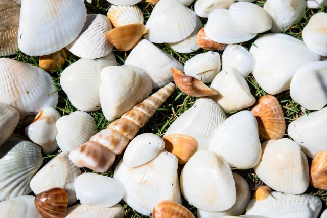 Weiße und orangefarbene Muscheln auf dem Rasen