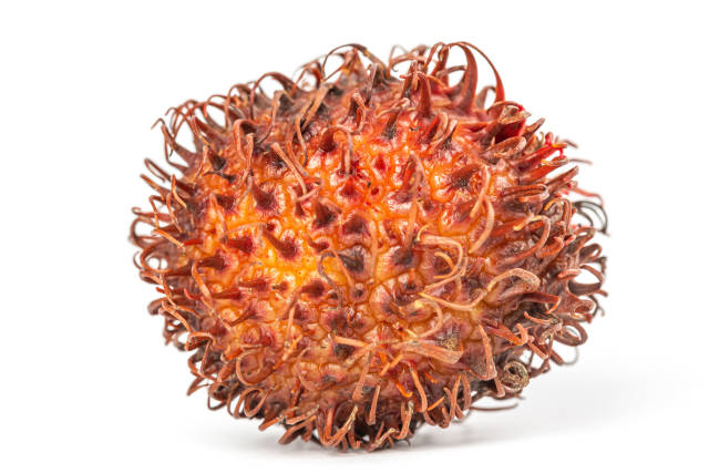 Exotic tropical rambutan fruit, close up