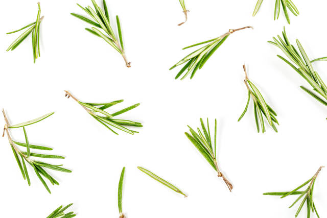Twigs and leaves of rosemary on a white background, top view