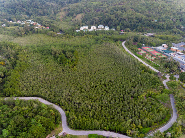 aerial photography of Mangrove Forest at western shore of Mahé, Seychelles