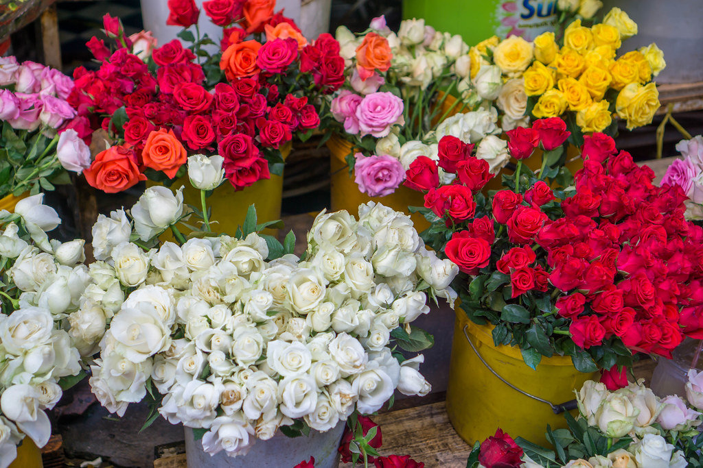 Pots with colorful Roses seen at the Flower Market in Saigon, Vietnam