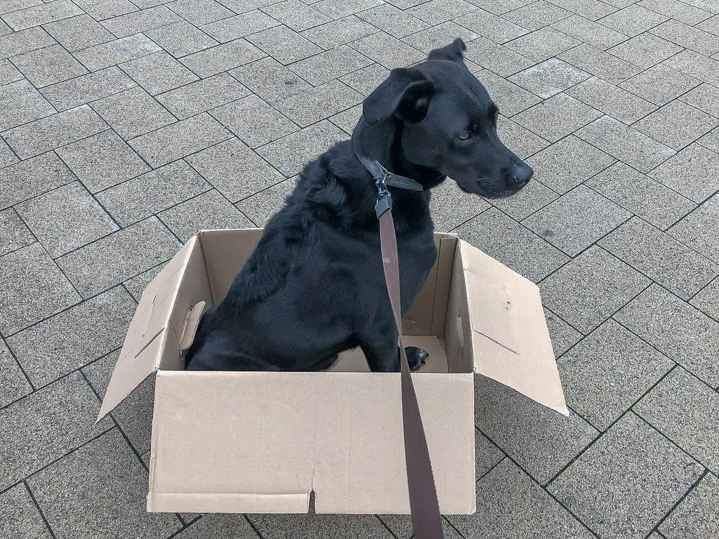 Umziehen mit Hund im Umzugskarton