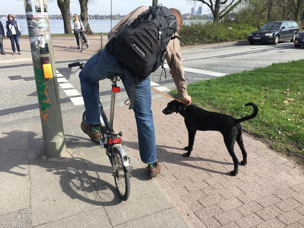 Junghund mit Fahrradfahrer