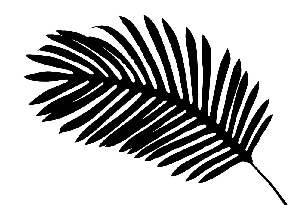 Isolated shadow of a tropical leaf over white background