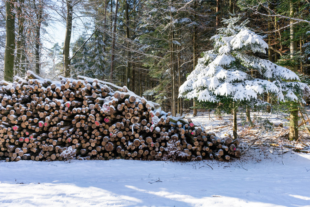 Tree logs being stored in the forrest covered in snow next to a small tree